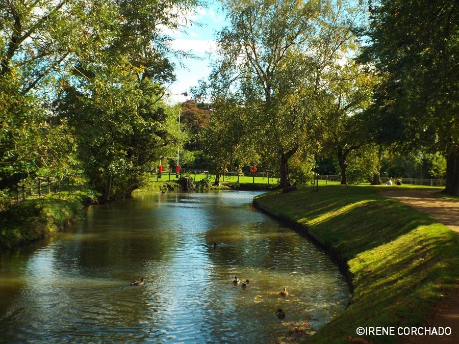 El Oxford de Alicia_Christ Church Meadow