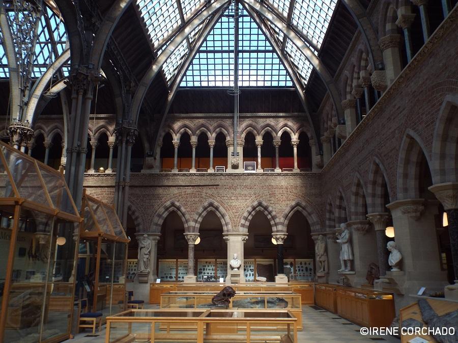 El Oxford de Alicia_Oxford University Museum of Natural History